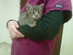 south bellmore veterinary group (10)