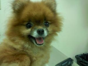 south bellmore veterinary group (3)