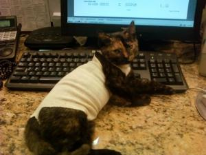 south bellmore veterinary group (4)